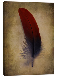 Canvas  Blue and red feather - Jaroslaw Blaminsky