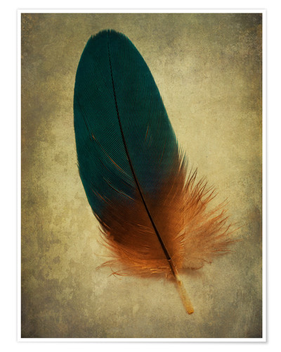 Premium poster Green and orange feather