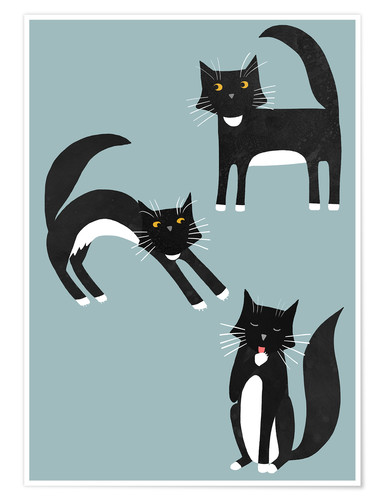 Premium poster Black cats with white paws