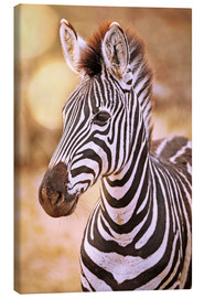 Canvas print  Young Zebra, South Africa - wiw