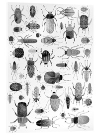 Acrylic print  Beetles, black and white - Nic Squirrell