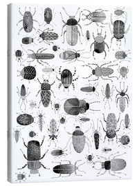 Canvas print  Beetles, black and white - Nic Squirrell
