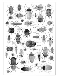 Poster  Ink Beetles and Bugs Art - Nic Squirrell