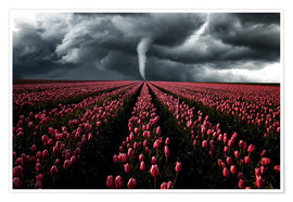 Premium poster Tornado and tulip field