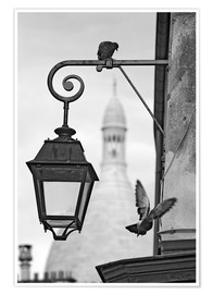 Poster  Montmartre pigeons with Sacre Coeur