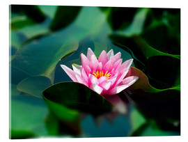 Acrylic print  Summer water lily IV - blackpool