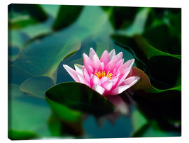 Canvas print  Summer water lily IV - blackpool
