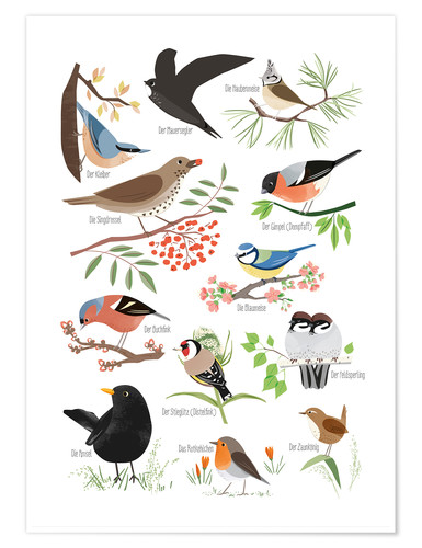 Premium poster Garden birds (German)