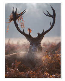 Premium poster Deer Stag in Winter