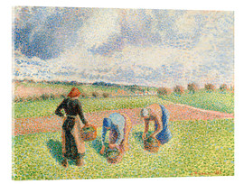 Acrylic print  Paysannes ramassant of the herb - Camille Pissarro