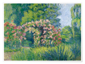 Poster  The Monet Rose Garden - Blanche Hoschede-Monet