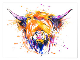 Premium poster  Scottish Highland Cow - Zaira Dzhaubaeva
