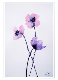 Premium poster Translucent Poppies