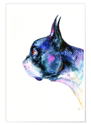 Premium poster Boston Terrier