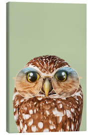 Canvas  HIPSTER OWL - Jonas Loose
