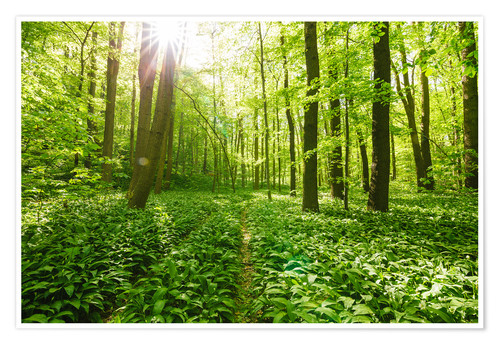 Premium poster Sun-flooded green forest landscape