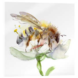 Acrylic print  Honey bee - Verbrugge Watercolor