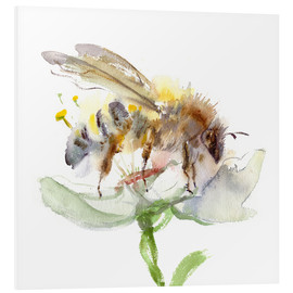 Foam board print  Honey bee - Verbrugge Watercolor