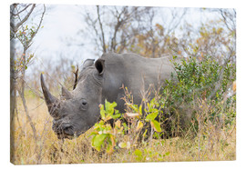 Canvas print  Rhino grazing in the bush, Kruger National Park, South Africa - Fabio Lamanna
