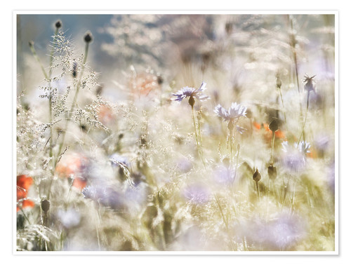 Premium poster Summer meadow in the morning