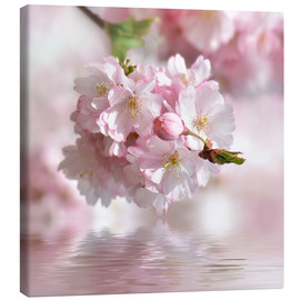 Canvas print  cherry blossom - Atteloi