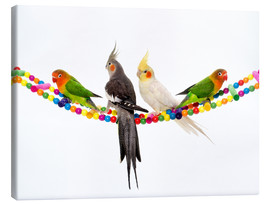 Canvas print  Lovebirds and cockatiels
