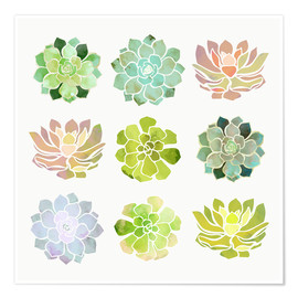 SpaceFrog Designs - Spring Succulents