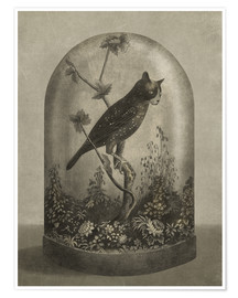 Premium poster  Curiosities Cabinet Cat Owl - Terry Fan