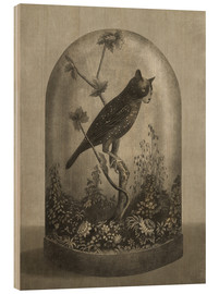 Wood print  Curiosities Cabinet Cat Owl - Terry Fan