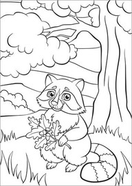 Colouring poster  Racoon