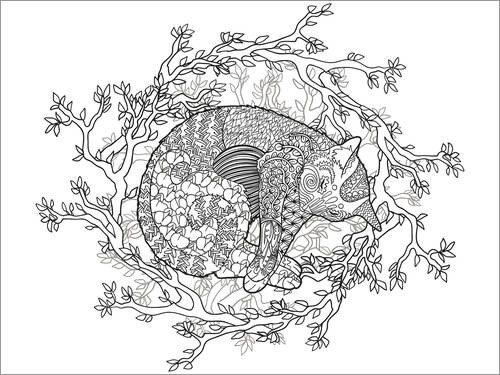 Colouring poster Sleeping cat