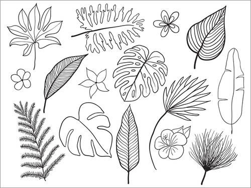 Colouring poster Variety of leaves