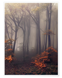 Premium poster Mysterious forest