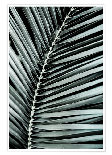 Premium poster French Palms 3