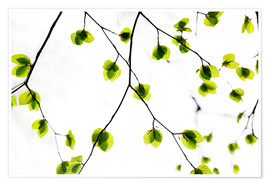 Premium poster Green Leaves 3