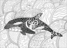 Colouring poster Orca whale