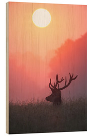 Wood print  A male deer Stag at sunset - Alex Saberi