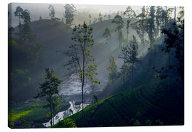 Canvas print  Enchanting tea plantation forest, Sri Lanka - Paul Kennedy