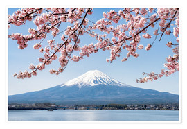Poster Mountain Fuji and cherry blossom at lake Kawaguchiko, Japan