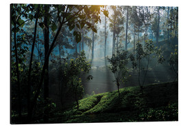 Aluminium print  Tea plantation forest Sri Lanka - Paul Kennedy