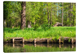 Canvas print  Landscape in the Spreewald area, Germany - Rico Ködder