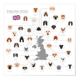 Premium poster English dog breeds