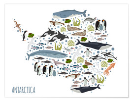 Premium poster Critters of the Antarctic