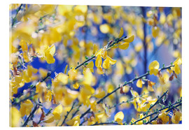 Acrylic print  Broom in the sunshine - Die Farbenflüsterin