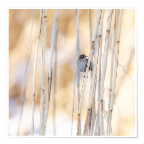 Premium poster little guest in the reed