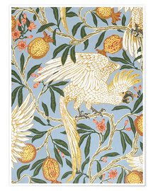 Premium poster  Cockatoo and Pomegranate - Walter Crane