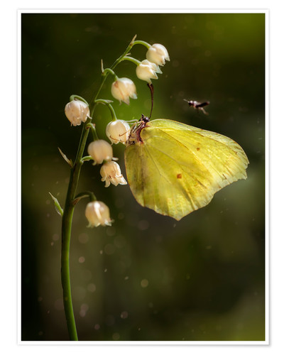 Premium poster Yellow butterfly on white bell flowers