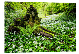 Acrylic print  Fairy Forest with wild garlic - Dieter Meyrl