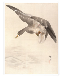 Poster  Ducks land on the water - Watanabe Seitei