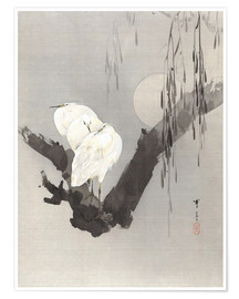 Premium poster egrets in a tree at night